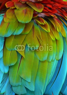 Macro photograph of the multi-colored feathers of a Scarlet Macaw (Ara macao)