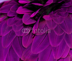 Fototapety Feathers; Purple