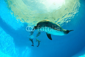 Fototapety Dolphins under water