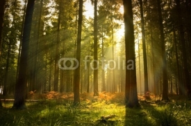 Fototapety Beautiful Forest