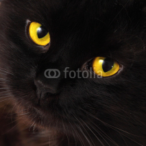 Fototapety Black cat looking to you with bright yellow eyes