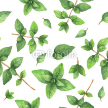 Fototapety Watercolor vector seamless pattern hand drawn herb oregano .