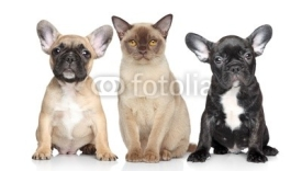 Naklejki Cat and dog puppies on a white background