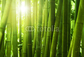 Fototapety Bamboo forest.