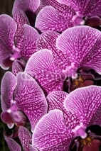 Fototapety bouquet of orchids
