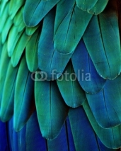 Fototapety Macaw Feathers (Blue/Green)