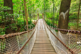 Obrazy i plakaty suspension bridge in the quiet forest