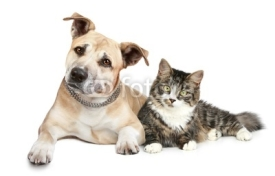 Naklejki Staffordshire terrier puppy and cat