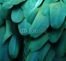Fototapety Macaw Feathers (Turquoise)