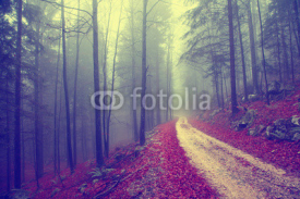 Fototapety Vintage forest road