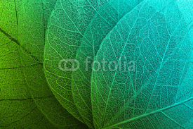 Fototapety Macro leaves background