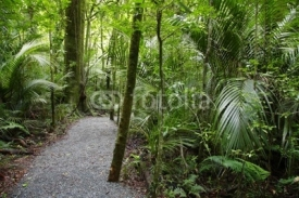 Fototapety Tropical forest