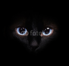 Fototapety Eyes of the siamese cat in the darkness