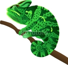 Fototapety a chameleon sits on a branch and tracks down a booty
