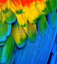 Naklejki Multi-Colored Macaw Feathers