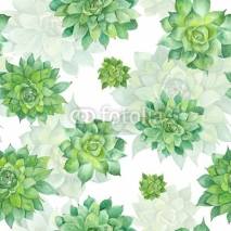 Fototapety Watercolor Succulent Pattern on White Background