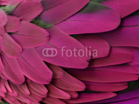 Fototapety Pink and Purple Feathers