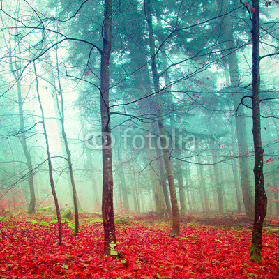 Colorful mystic autumn trees