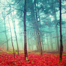 Fototapety Colorful mystic autumn trees