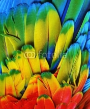 Fototapety Macaw Feathers (Multi-Colored)