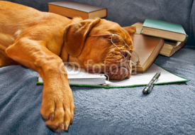 Obrazy i plakaty Dog Sleeping after Studying