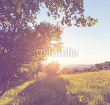 Fototapety Summer meadow