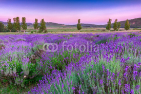 Fototapety Sunset over a summer lavender field in Tihany, Hungary