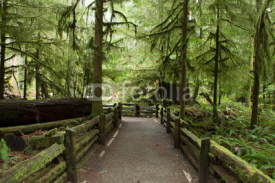 Fototapety Lush Rainforest Nature Scene