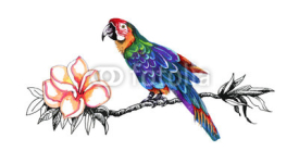 Obrazy i plakaty Beautiful colorful parrot on twig.