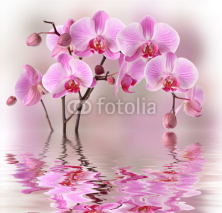 Naklejki Pink orchids with water reflexion