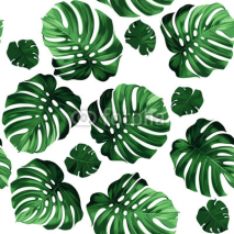 Fototapety leaves monstera background