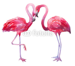Fototapety watercolor illustration of a flamingo
