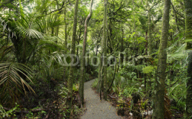 Fototapety Walking trail