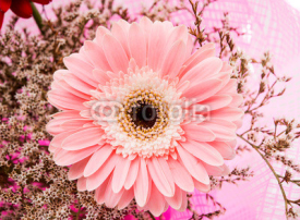 Obrazy i plakaty beautiful gerbera flower