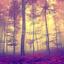 Fototapety Vintage autumn forest