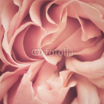 Fototapety Pink Rose Abstract