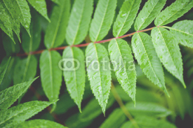 Fototapety Fern Leaves