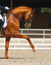 Obrazy i plakaty Dressage: portrait of sorrel horse