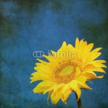 Naklejki vintage image of sunflower on grunge background