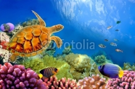 Naklejki Photo of a coral colony and turtle