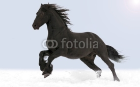 Obrazy i plakaty The horse gallops through the snow