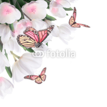 Fototapety White tulips with green grass and  butterfly. Floral background.