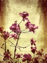 Fototapety Beautiful grunge background with magnolia