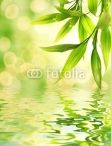 Naklejki Bamboo leaves reflected in rendered water