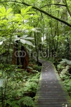 Naklejki Boardwalk in forest
