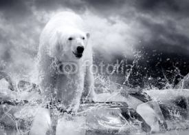 Fototapety White Polar Bear Hunter on the Ice in water drops.