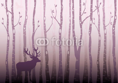 Birch tree forest, vector