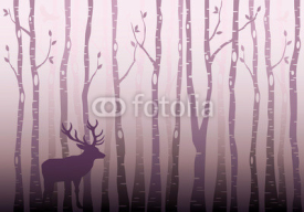 Fototapety Birch tree forest, vector