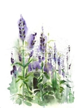 Fototapety Watercolor -Lavender field-