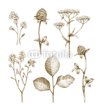 Fototapety Wild flowers collection isolated on white background